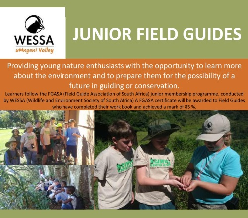 Junior Field Guides Poster July 2017 002